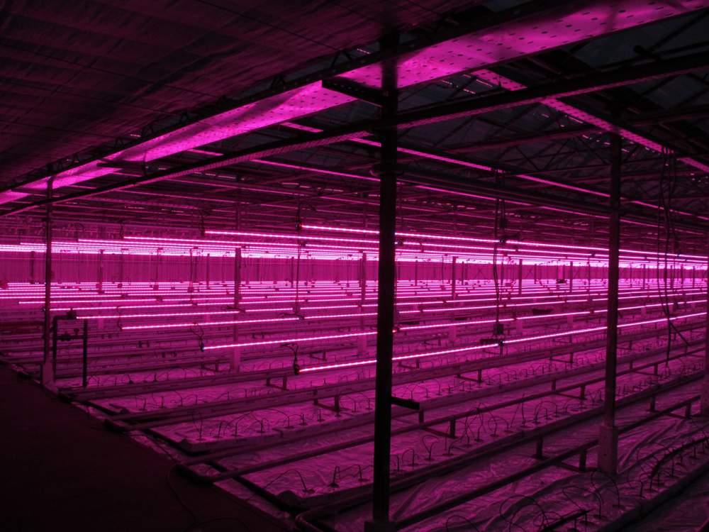LED világítás növényeknek