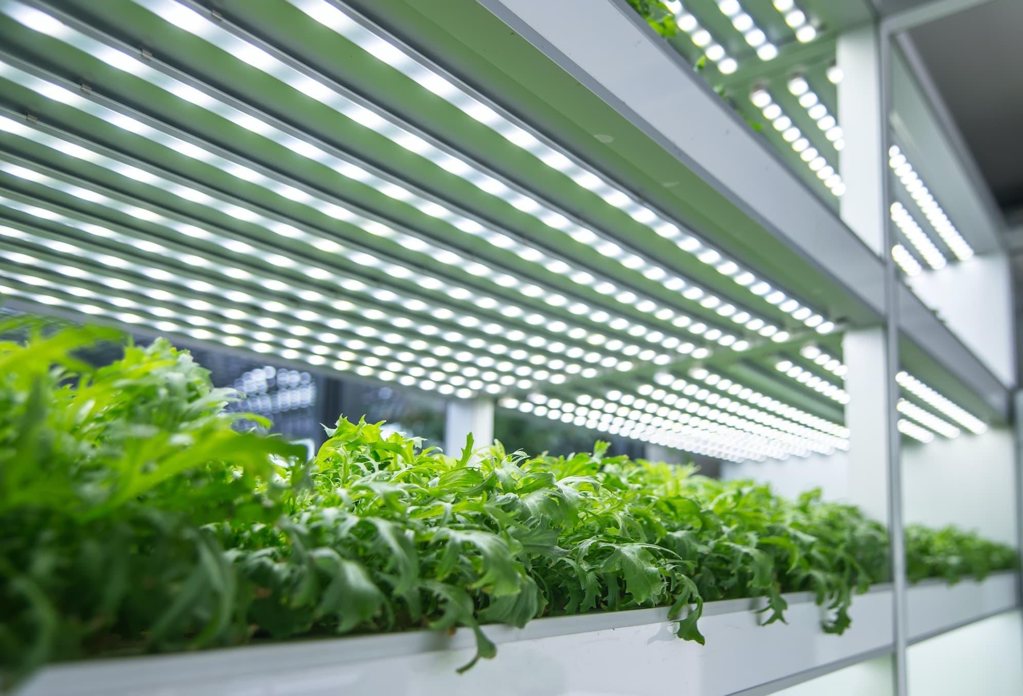 Növénytermesztés és állattenyésztés világítás